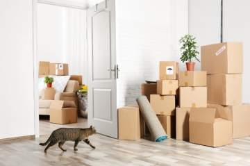 Gérer un déménagement avec un animal de compagnie